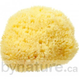 Honeycomb Sea Sponge