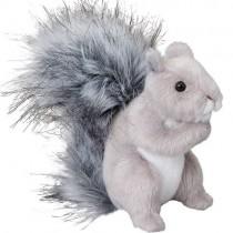 Shasta Grey Squirrel